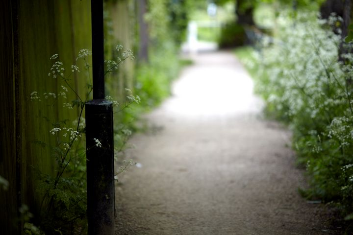 Path by Tooting Bec - Carlos Perez