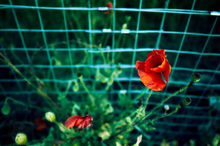 Squared Flower - Carlos Perez