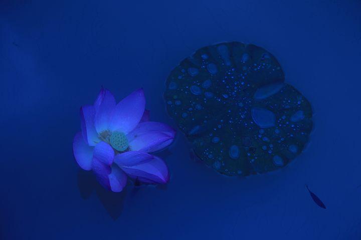 Lotus in the Dark - China Esthetics
