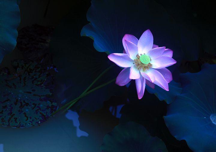 Pretty Lotus - China Esthetics