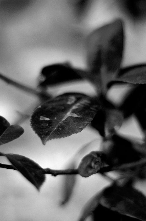 Leaf love - Free Style Art