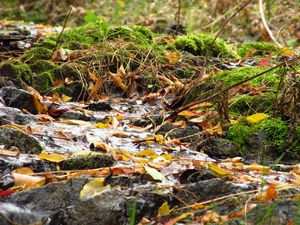 Autumn leaves among the stream