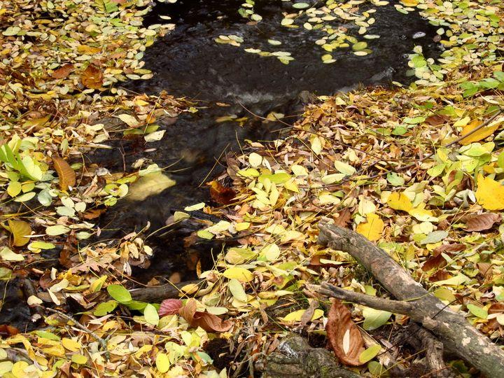 The autumn river - NVT
