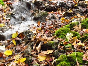 Autumn leaves and stream