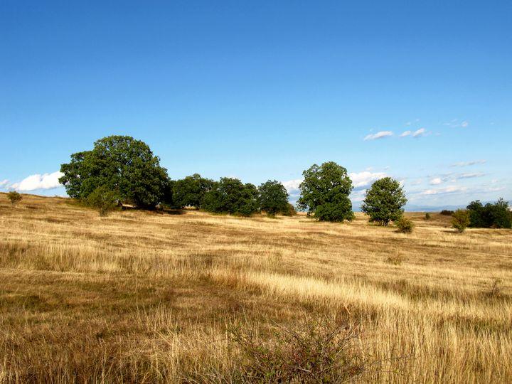 Greenery among the yellow field - NVT