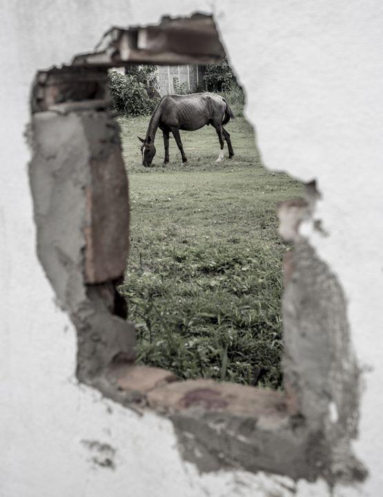 """Hidden Horse - Daniel """"Frentzen"""" Garcia"""