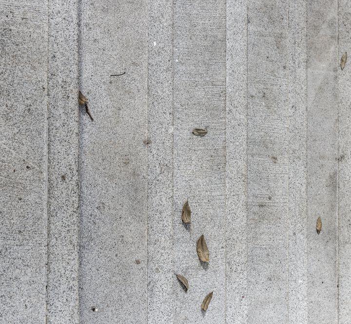 "Autumn Leaves on Stairs - Daniel ""Frentzen"" Garcia"