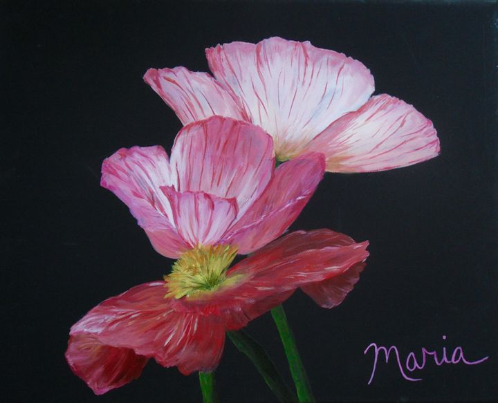 Pink Orchids - Maria Collie