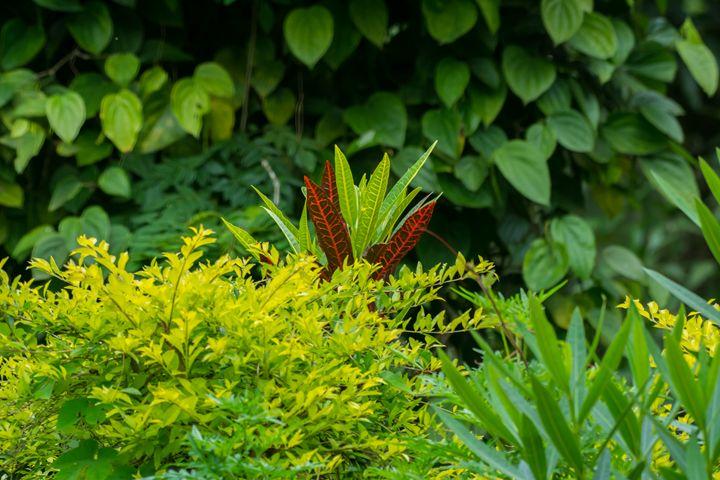 Pretentious Flower! - Krishna Prasad R
