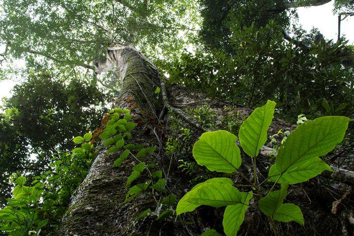 The Tree Of Life - Krishna Prasad R