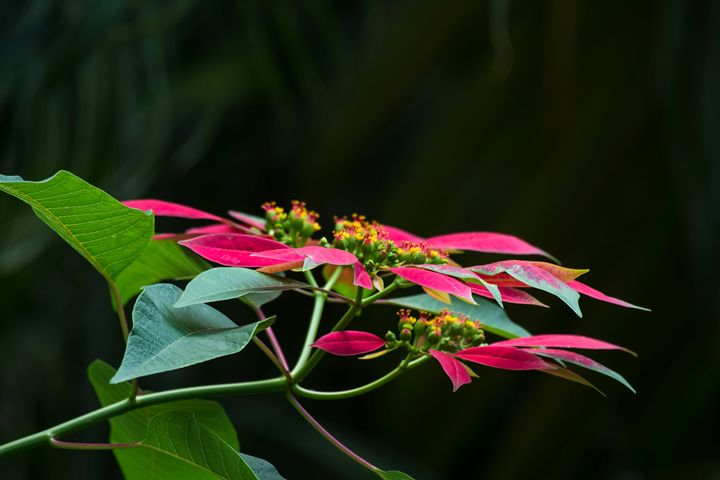 Colours Of Life - Krishna Prasad R