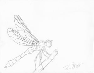 A relaxed dragonfly