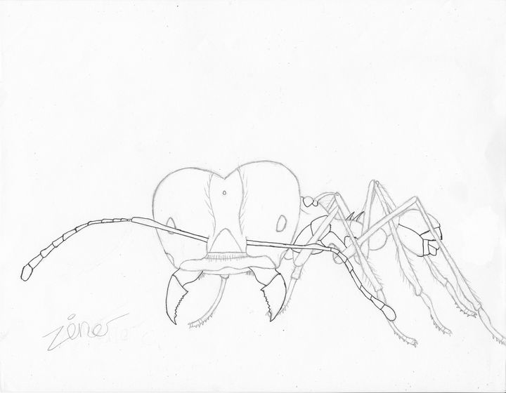 leaf cutter ant - The broken teleporter