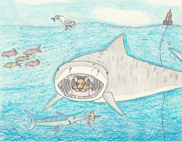 A tiger sharks feast - The broken teleporter
