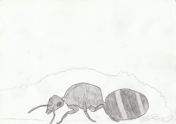 Field ant queen - The broken teleporter