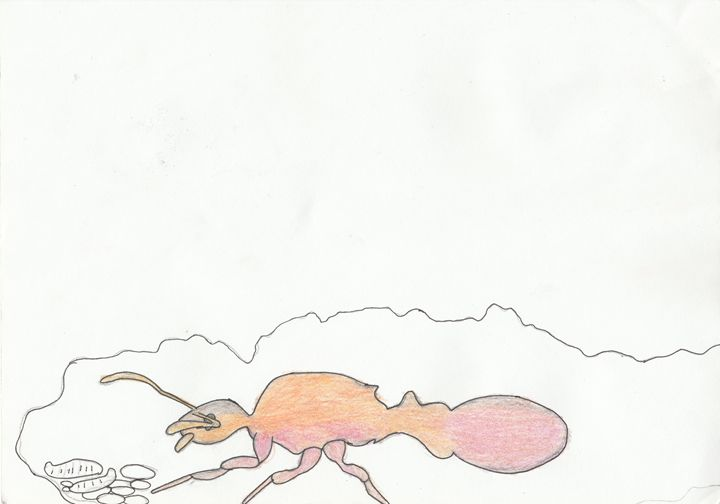 common red ant queen - The broken teleporter
