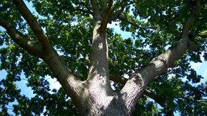 3 Branch Shine