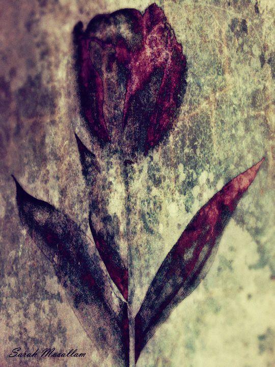 Tulip - Sarah Musallam