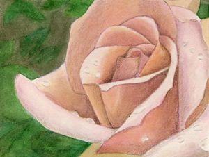 Tutti Frutti Rose