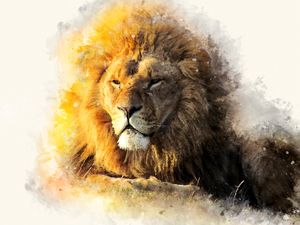 Wise lion