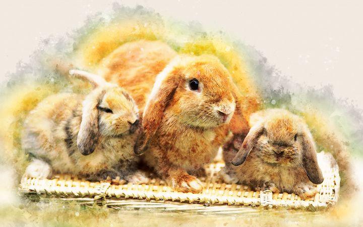 Cute rabbits - Art