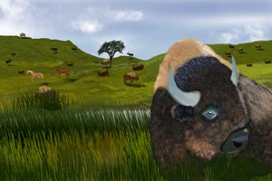 Buffalo Frontier Range