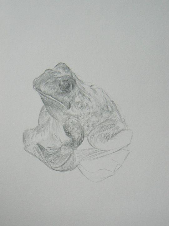Sketch of a Frog - Heidi's Gallery
