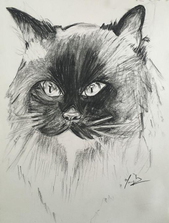 A Cat's Glare - Tanaya K.