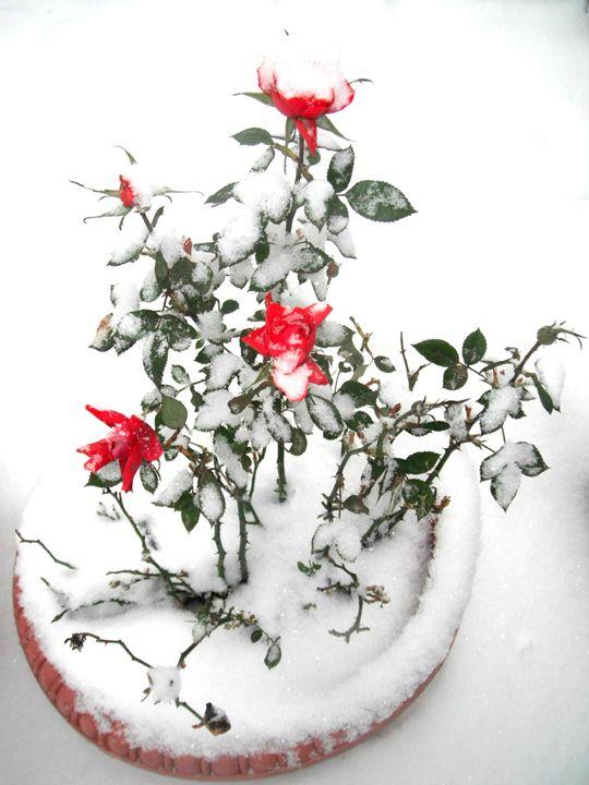 Frozen Rose - Beautiful World