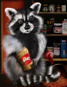 Masie the Racoon