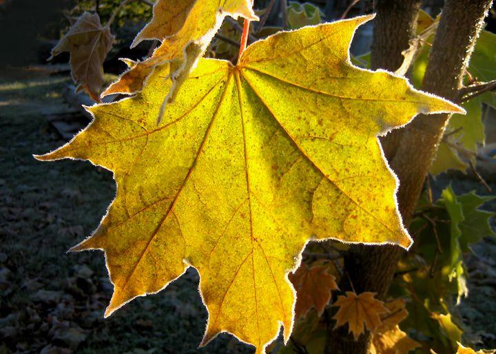 The first autumn frost - Yury Yanin