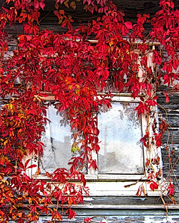 Window - Yury Yanin