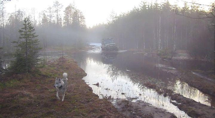 In the fog - Yury Yanin