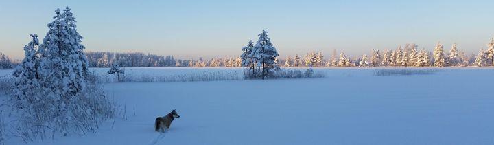 Winter hunting - Yury Yanin