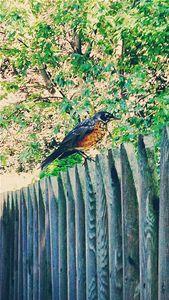 The Bird - Vigilante