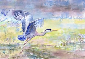 Flying Blue Heron on the lake