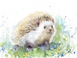 Little  Hedgehog in my garden