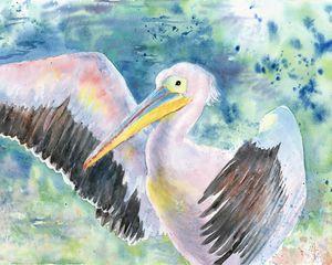 Pelican on blue