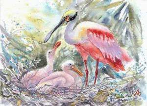Roseate Spoonbill with chicks