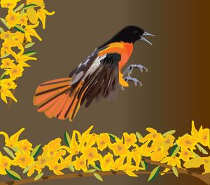 Bird and Nature