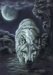 Thirsty wolf in moonlight