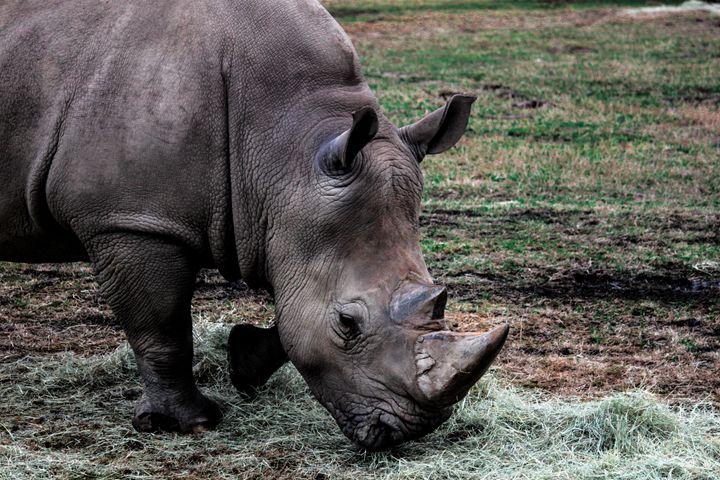 White Rhino - Azadiax's Photos
