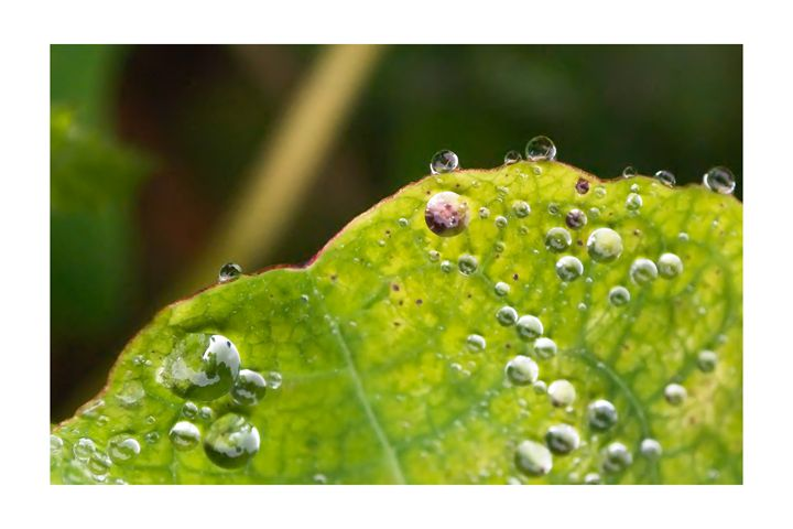 Green Droplets - Andrew Dupuis of ImageLo.co