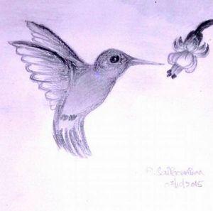 Humming Bird