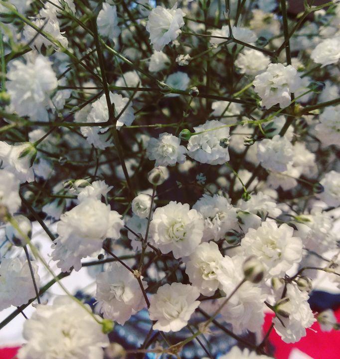 Flowers - Lydia Knoeller