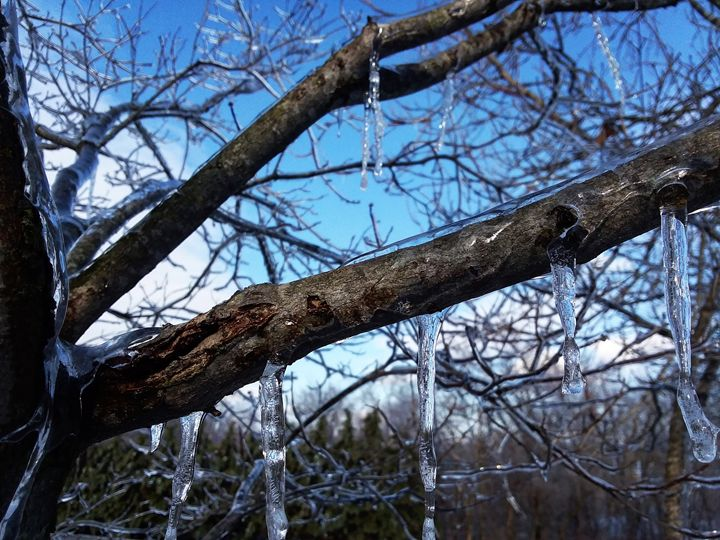 Ice on a Branch - Lydia Knoeller