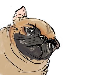 rough pug sketch