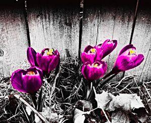 Spring Rebirth - NSR- Dezigns