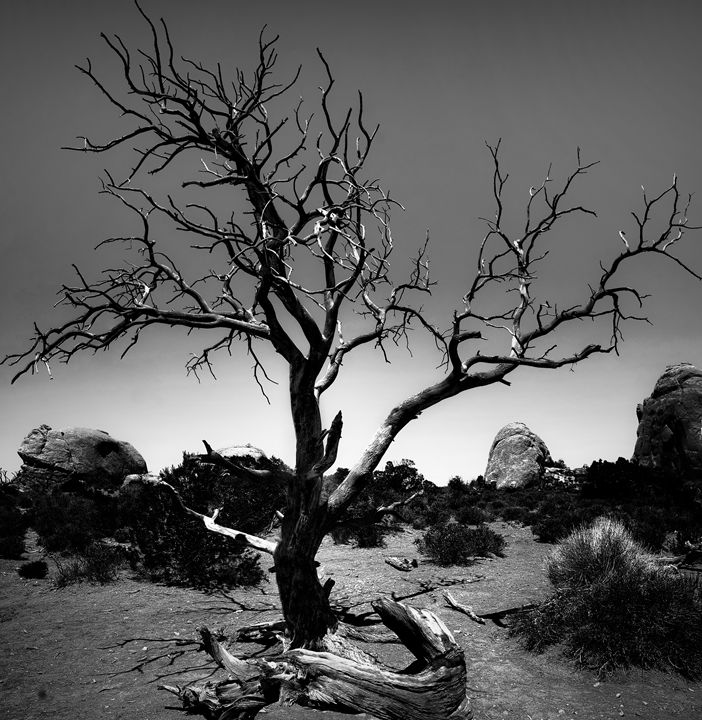 Desert Landscape - MaryLanePhotography