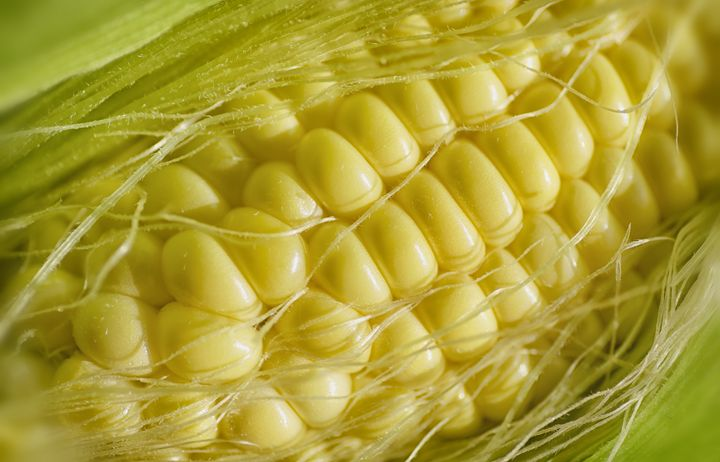 Corn - MaryLanePhotography